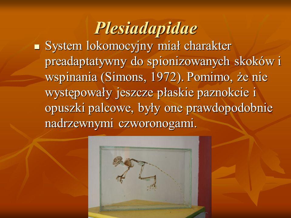 Plesiadapidae System lokomocyjny miał charakter preadaptatywny do spionizowanych skoków i wspinania (Simons, 1972). Pomimo, że nie występowały jeszcze