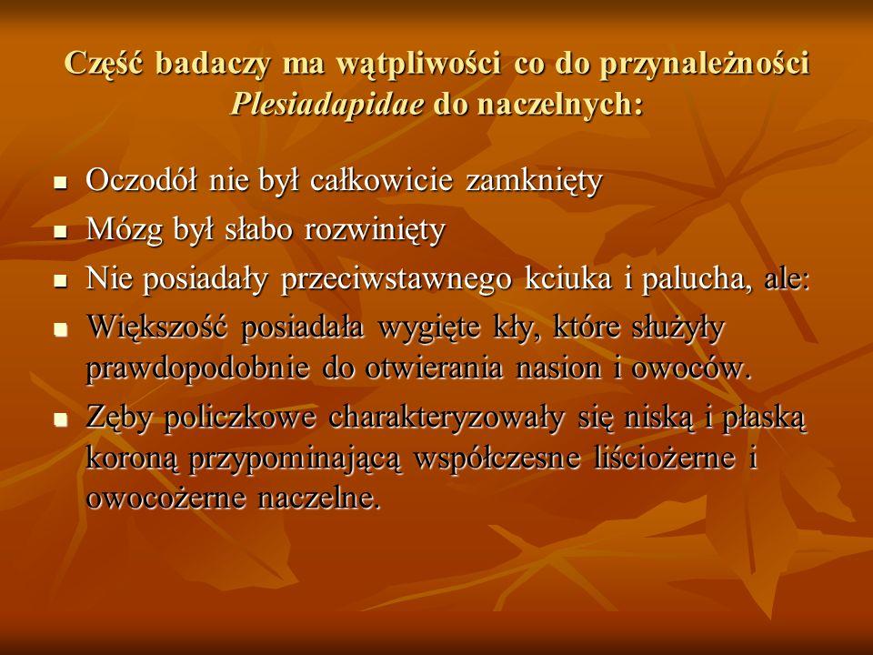 Część badaczy ma wątpliwości co do przynależności Plesiadapidae do naczelnych: Oczodół nie był całkowicie zamknięty Oczodół nie był całkowicie zamknię