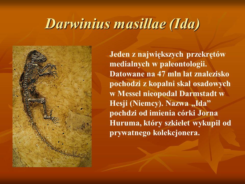 Darwinius masillae (Ida) Jeden z największych przekrętów medialnych w paleontologii. Datowane na 47 mln lat znalezisko pochodzi z kopalni skał osadowy