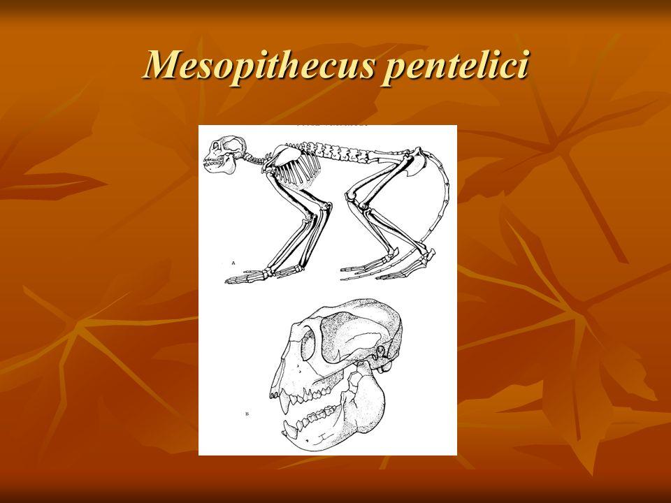 Mesopithecus pentelici