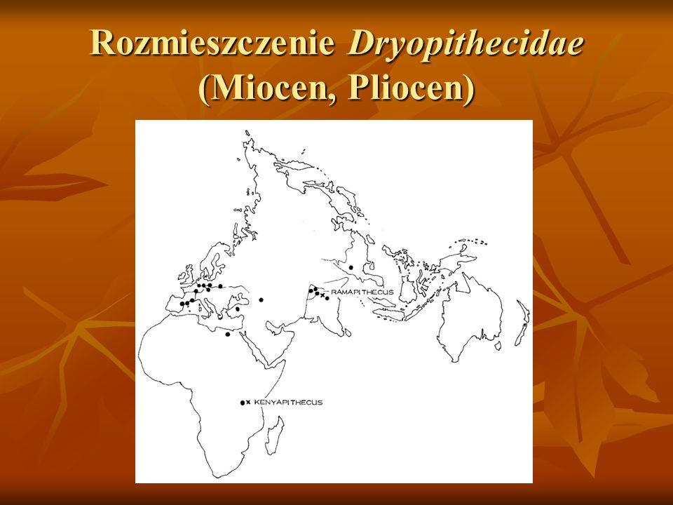 Rozmieszczenie Dryopithecidae (Miocen, Pliocen)