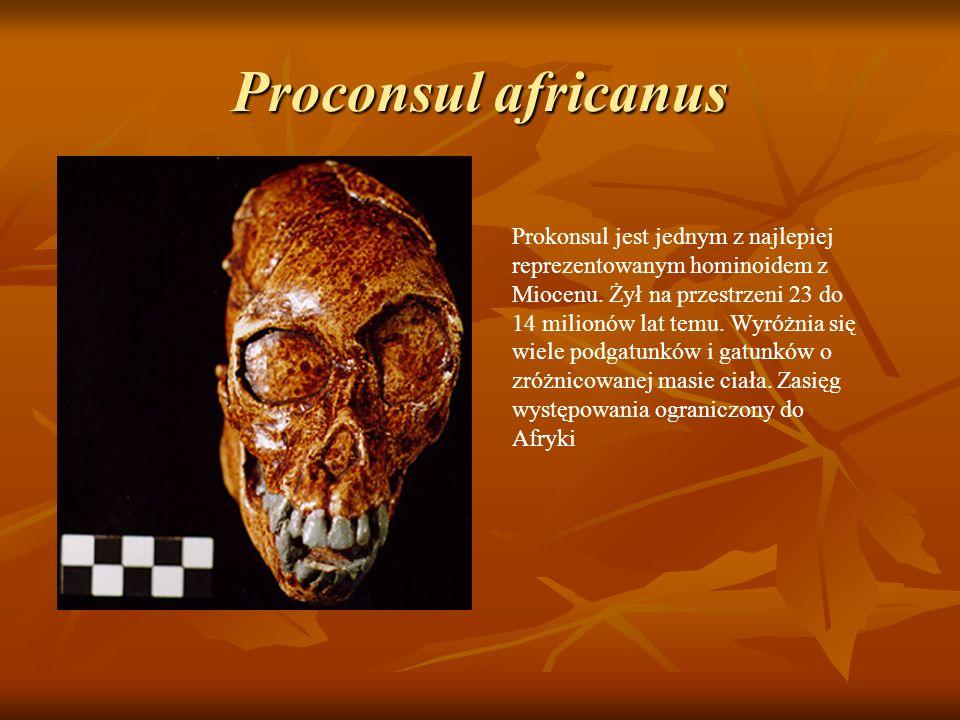 Prokonsul jest jednym z najlepiej reprezentowanym hominoidem z Miocenu. Żył na przestrzeni 23 do 14 milionów lat temu. Wyróżnia się wiele podgatunków