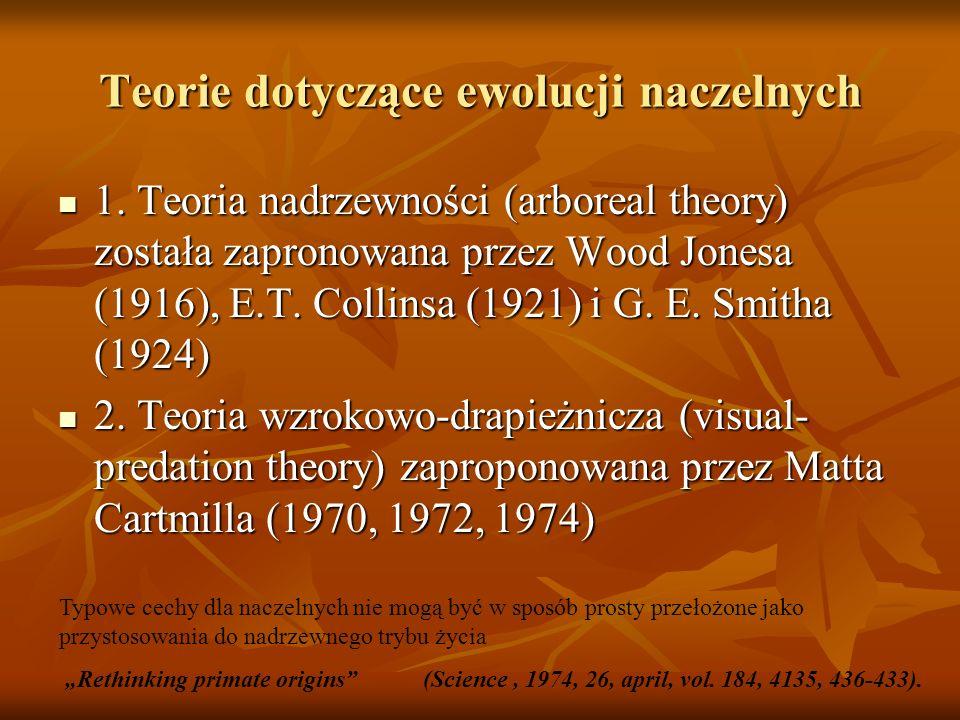 Teorie dotyczące ewolucji naczelnych 1. Teoria nadrzewności (arboreal theory) została zapronowana przez Wood Jonesa (1916), E.T. Collinsa (1921) i G.