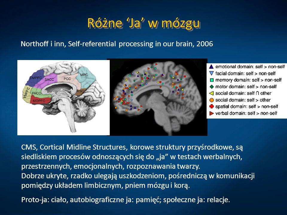 Różne 'Ja' w mózgu Northoff i inn, Self-referential processing in our brain, 2006 CMS, Cortical Midline Structures, korowe struktury przyśrodkowe, są