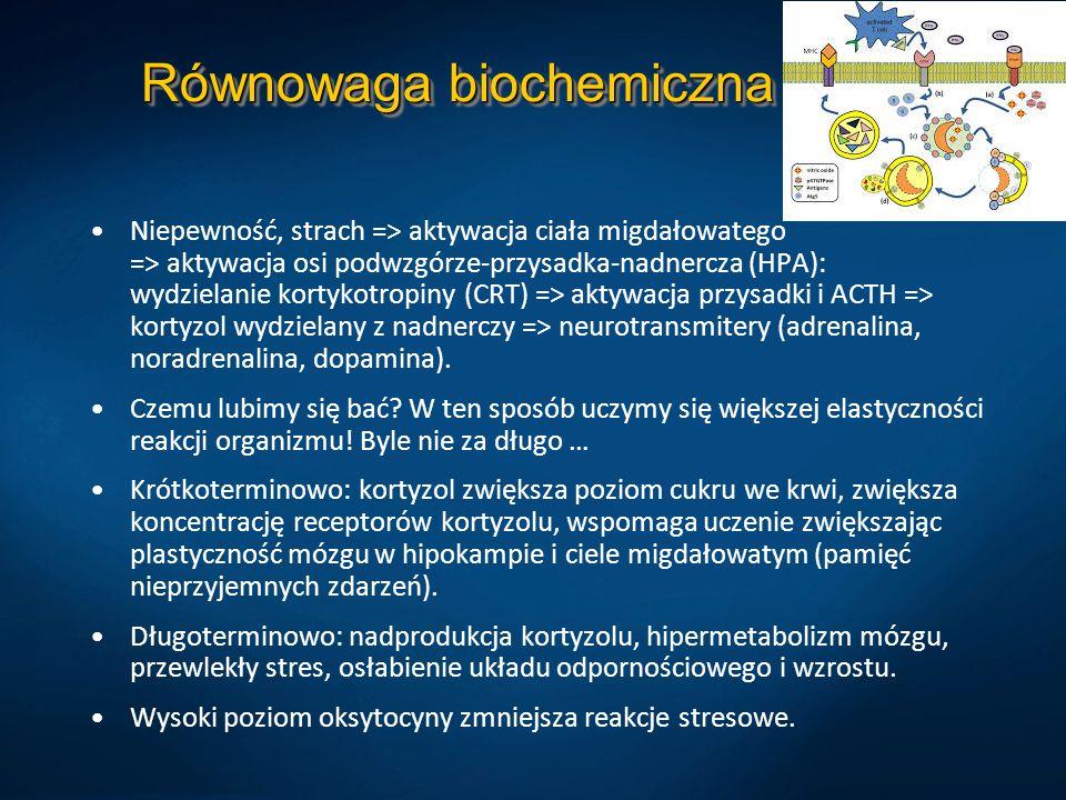 Równowaga biochemiczna Niepewność, strach => aktywacja ciała migdałowatego => aktywacja osi podwzgórze-przysadka-nadnercza (HPA): wydzielanie kortykotropiny (CRT) => aktywacja przysadki i ACTH => kortyzol wydzielany z nadnerczy => neurotransmitery (adrenalina, noradrenalina, dopamina).
