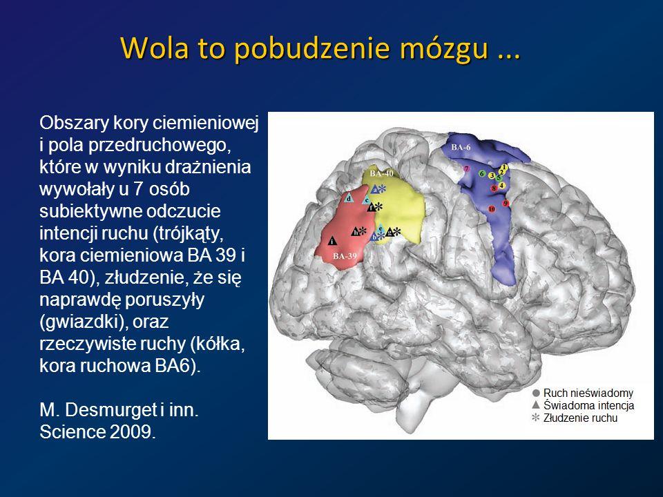 Wola to pobudzenie mózgu...