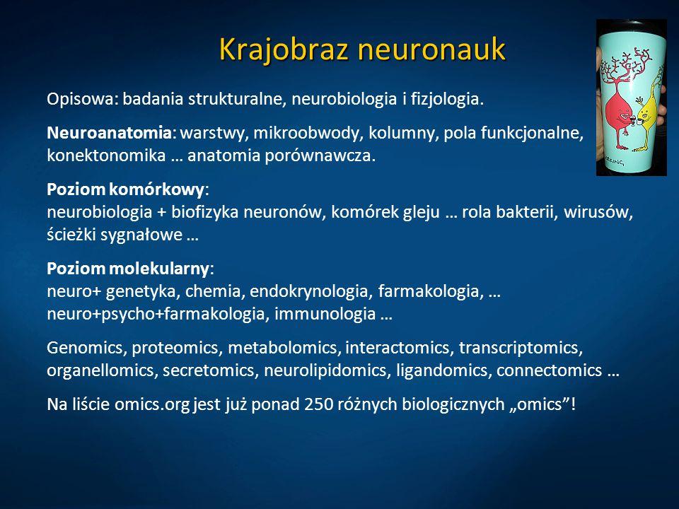 Krajobraz neuronauk Opisowa: badania strukturalne, neurobiologia i fizjologia. Neuroanatomia: warstwy, mikroobwody, kolumny, pola funkcjonalne, konekt