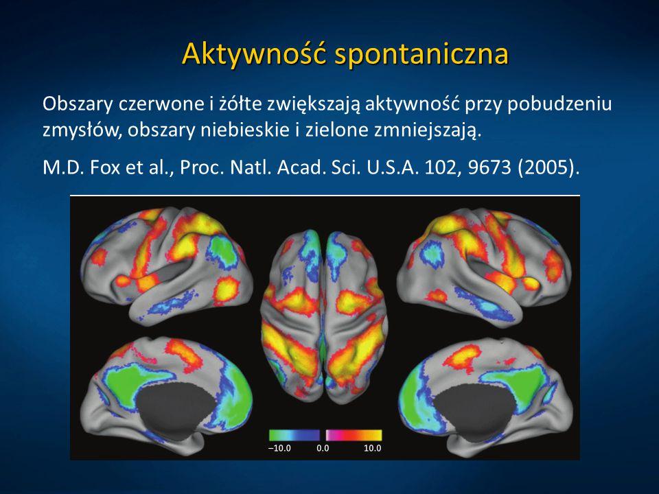 Aktywność spontaniczna Obszary czerwone i żółte zwiększają aktywność przy pobudzeniu zmysłów, obszary niebieskie i zielone zmniejszają. M.D. Fox et al