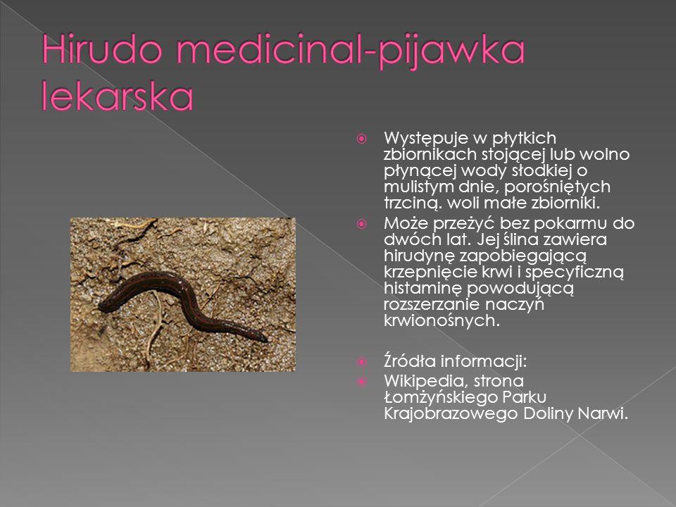  6a  bezkręgowce  Daria Borawska  Klaudia Dąbkowska