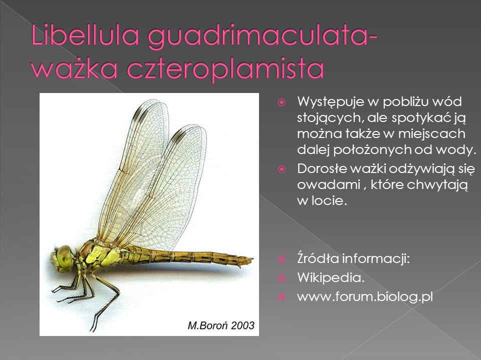 Występuje od lipca do października na polach, łąkach i w lasach.