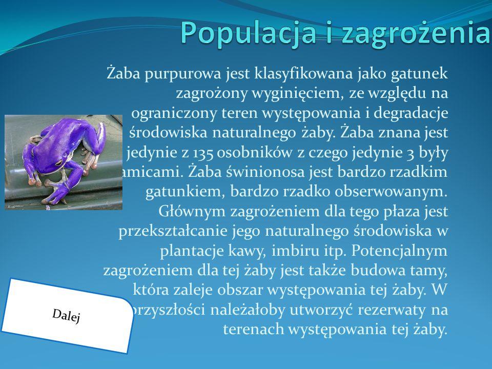 Żaba purpurowa jest klasyfikowana jako gatunek zagrożony wyginięciem, ze względu na ograniczony teren występowania i degradacje środowiska naturalnego