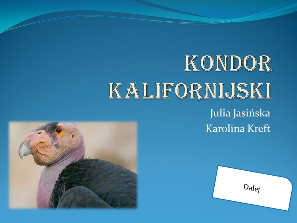 Julia Jasińska Karolina Kreft