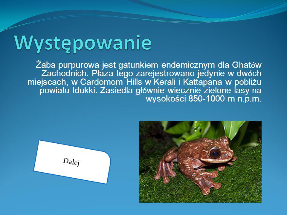 Żaba purpurowa jest gatunkiem endemicznym dla Ghat ó w Zachodnich. Płaza tego zarejestrowano jedynie w dw ó ch miejscach, w Cardomom Hills w Kerali i