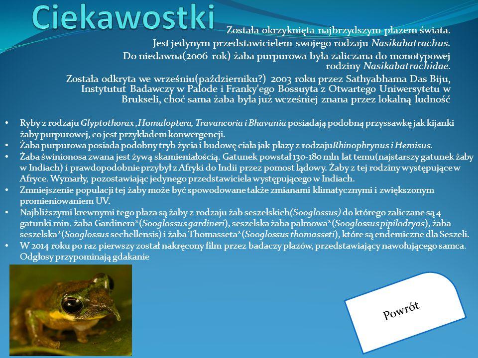 Została okrzyknięta najbrzydszym płazem świata. Jest jedynym przedstawicielem swojego rodzaju Nasikabatrachus. Do niedawna(2006 rok) żaba purpurowa by