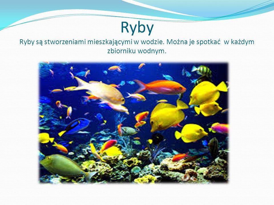 Ryby Ryby są stworzeniami mieszkającymi w wodzie. Można je spotkać w każdym zbiorniku wodnym.