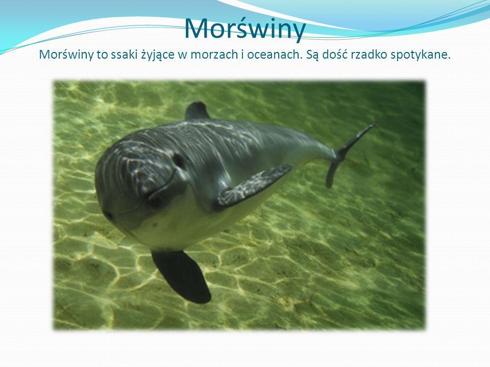 Morświny Morświny to ssaki żyjące w morzach i oceanach. Są dość rzadko spotykane.