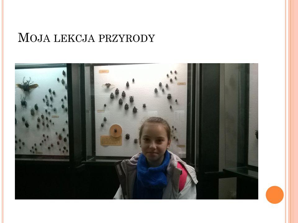 D ZIĘKUJĘ Prezentację przygotowała Uczennica klasy IV Szkoły Podstawowej w Wyszatycach: Weronika Stochła