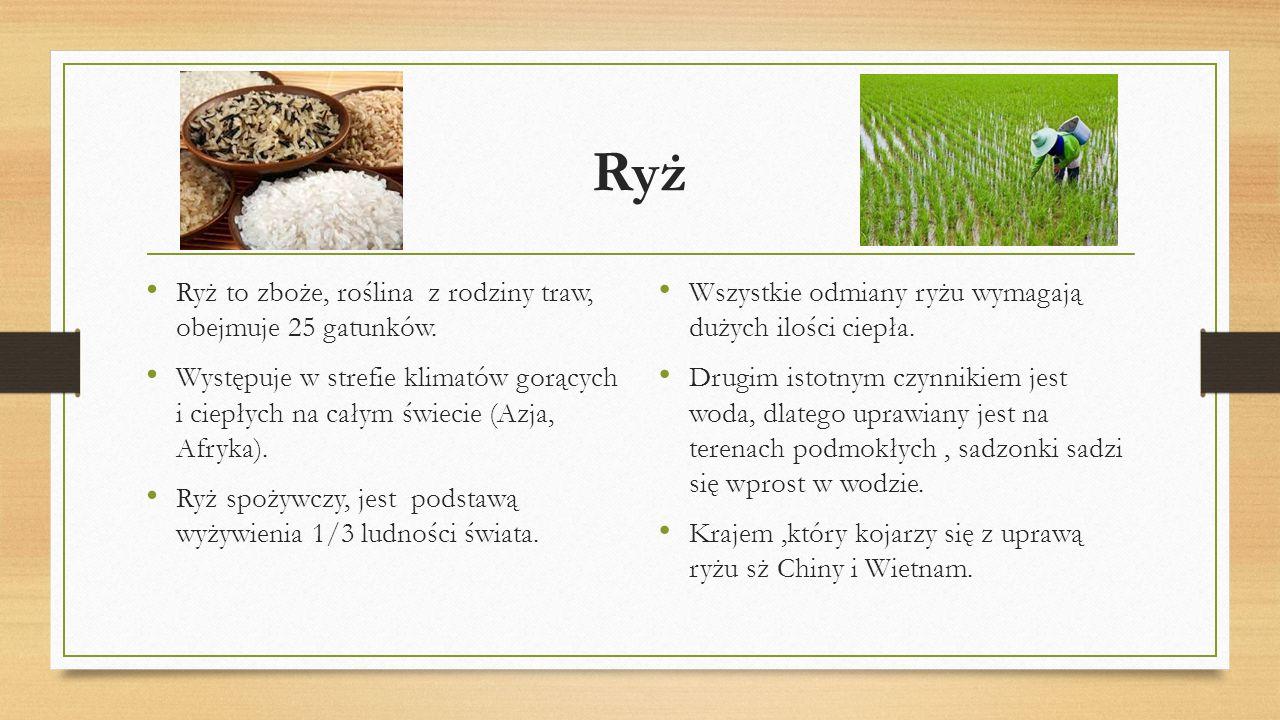 Ryż Ryż to zboże, roślina z rodziny traw, obejmuje 25 gatunków. Występuje w strefie klimatów gorących i ciepłych na całym świecie (Azja, Afryka). Ryż
