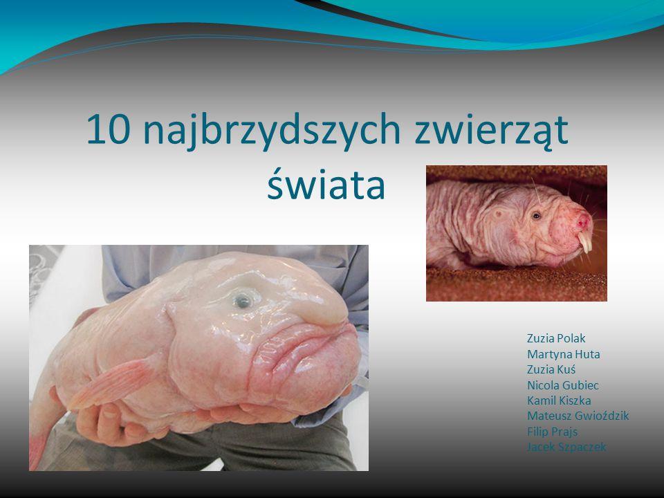 10 miejsce zajmuje Blobfish Blobfish to rybka zamieszkująca głębiny oceanów, gdzie panuje bardzo duże ciśnienie.