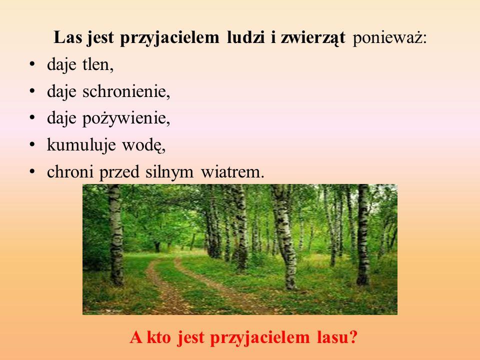 Las jest przyjacielem ludzi i zwierząt ponieważ: daje tlen, daje schronienie, daje pożywienie, kumuluje wodę, chroni przed silnym wiatrem.