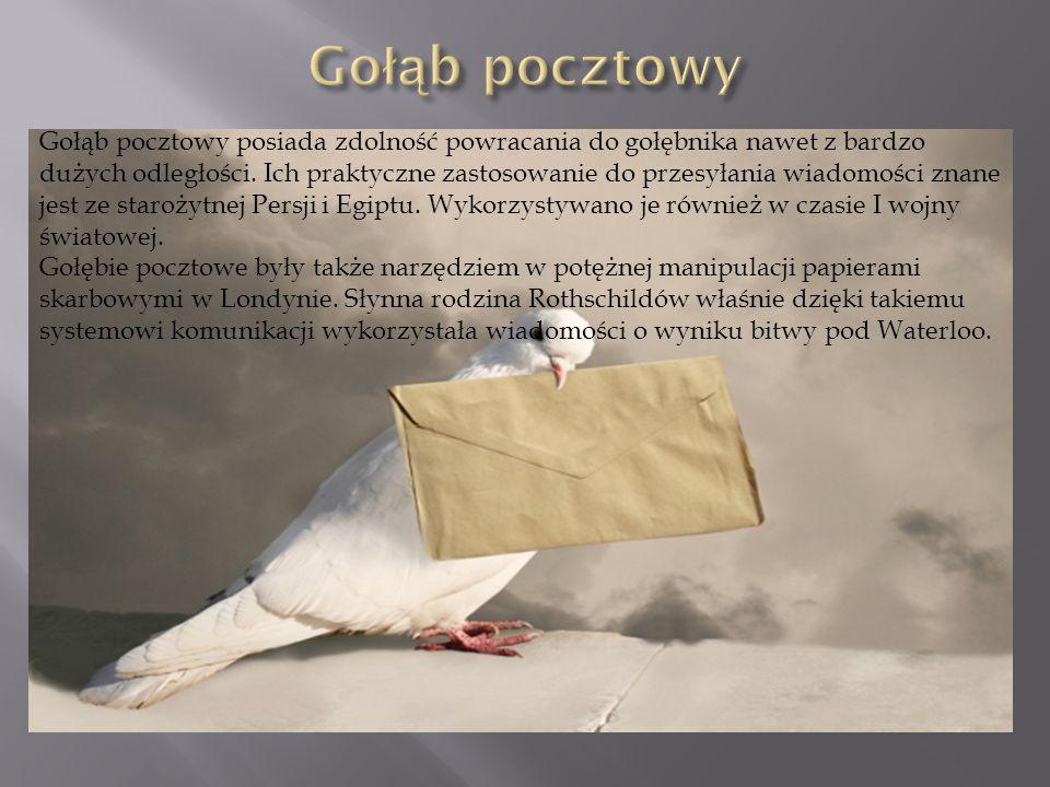 Gołąb pocztowy posiada zdolność powracania do gołębnika nawet z bardzo dużych odległości. Ich praktyczne zastosowanie do przesyłania wiadomości znane