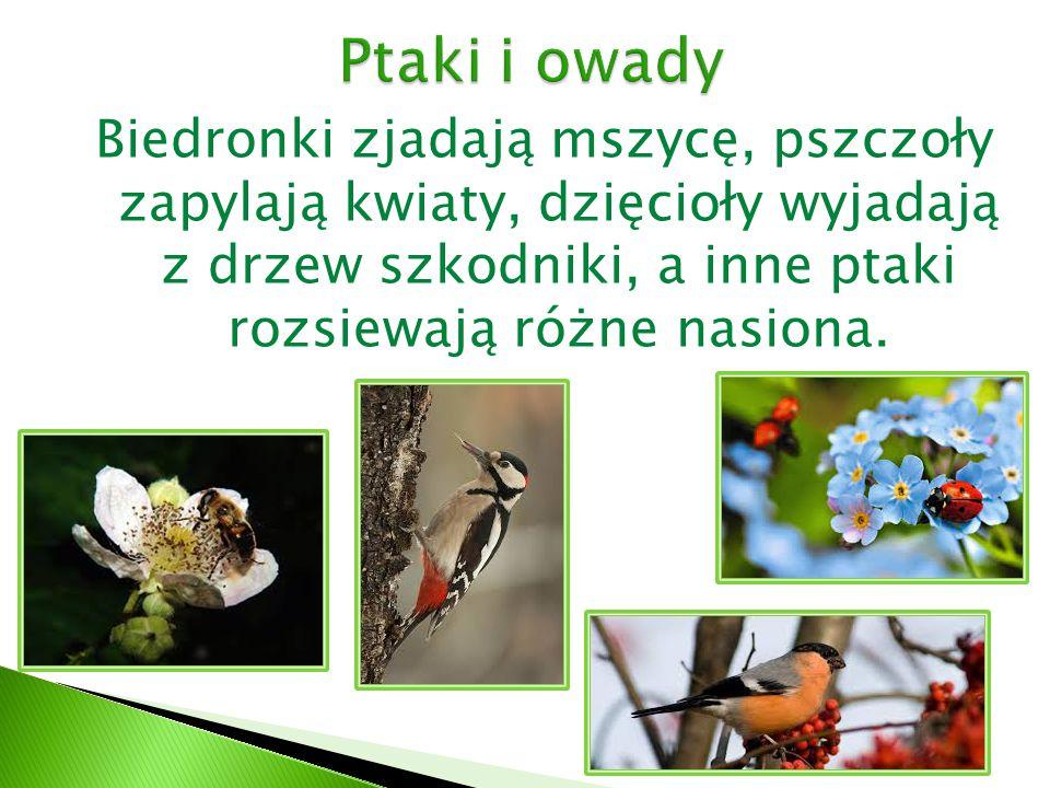 Biedronki zjadają mszycę, pszczoły zapylają kwiaty, dzięcioły wyjadają z drzew szkodniki, a inne ptaki rozsiewają różne nasiona.