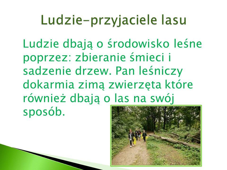 Ludzie dbają o środowisko leśne poprzez: zbieranie śmieci i sadzenie drzew. Pan leśniczy dokarmia zimą zwierzęta które również dbają o las na swój spo