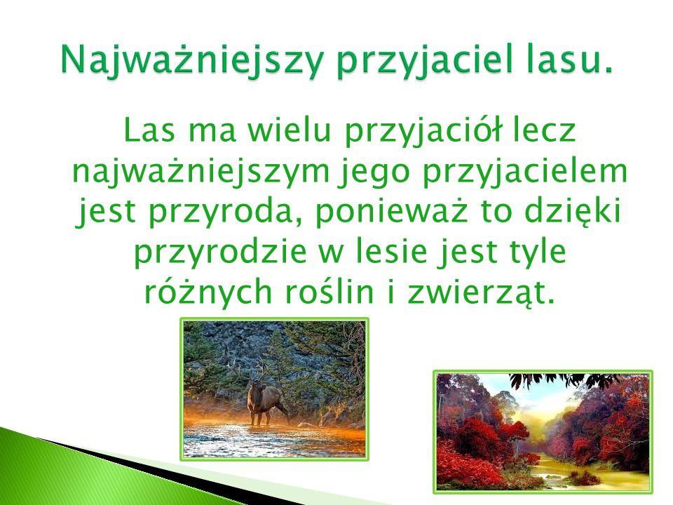 Las ma wielu przyjaciół lecz najważniejszym jego przyjacielem jest przyroda, ponieważ to dzięki przyrodzie w lesie jest tyle różnych roślin i zwierząt