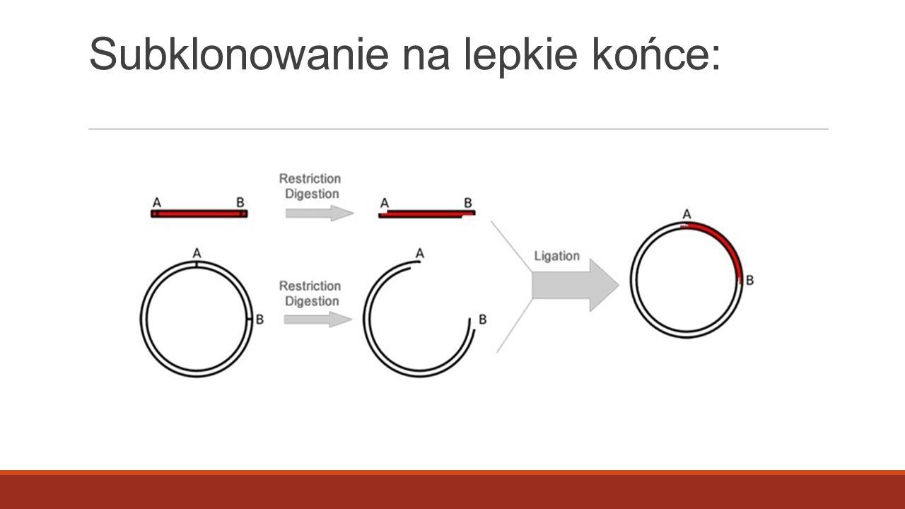 fragmenty namnażane metodą PCR w trakcie projektowania reakcji (dobierania starterów) można dołączyć do sekwencji startera sekwencję rozpoznawaną przez dowolny enzym restrykcyjny.