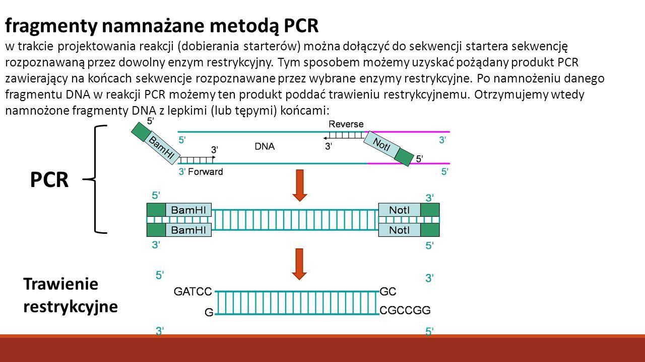 fragmenty namnażane metodą PCR w trakcie projektowania reakcji (dobierania starterów) można dołączyć do sekwencji startera sekwencję rozpoznawaną prze