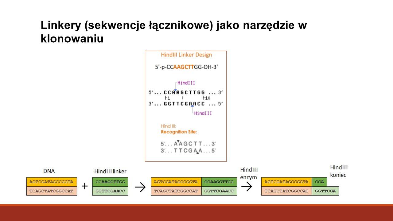 Linkery (sekwencje łącznikowe) jako narzędzie w klonowaniu