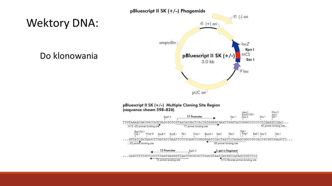 Wektory DNA: Do klonowania