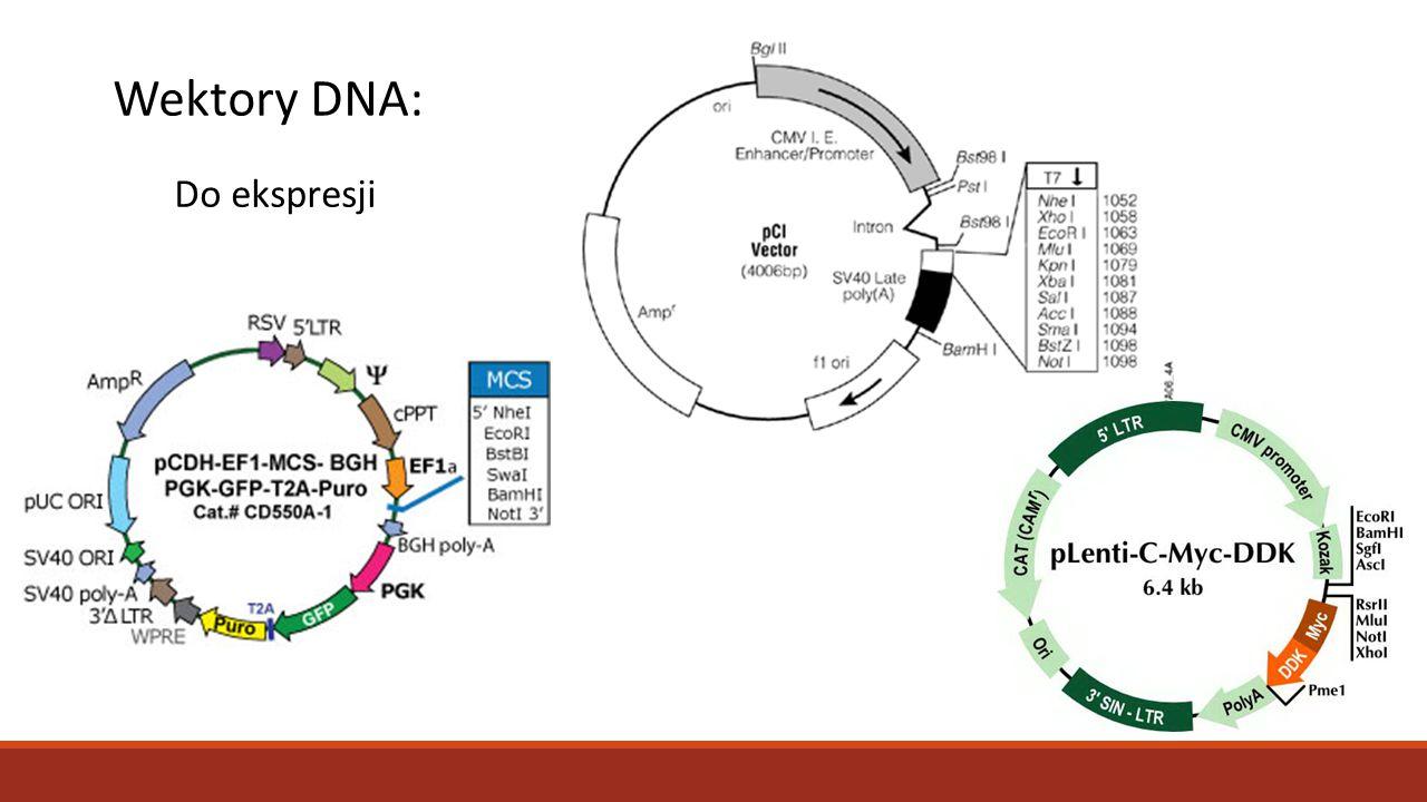 Wektory DNA: Do ekspresji