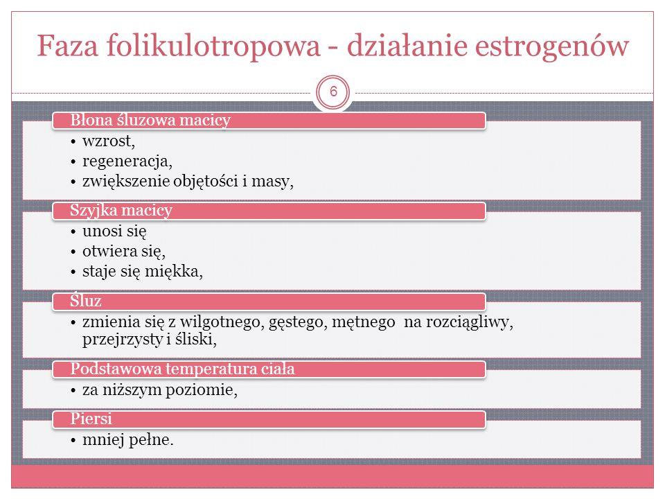 Faza folikulotropowa - działanie estrogenów wzrost, regeneracja, zwiększenie objętości i masy, Błona śluzowa macicy unosi się otwiera się, staje się m