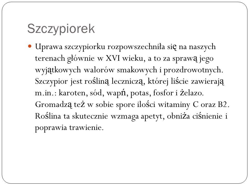 Szczypiorek Uprawa szczypiorku rozpowszechniła si ę na naszych terenach głównie w XVI wieku, a to za spraw ą jego wyj ą tkowych walorów smakowych i pr