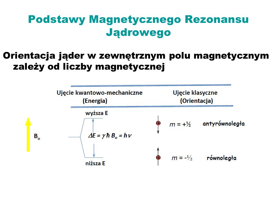 Podstawy Magnetycznego Rezonansu Jądrowego Orientacja jąder w zewnętrznym polu magnetycznym zależy od liczby magnetycznej