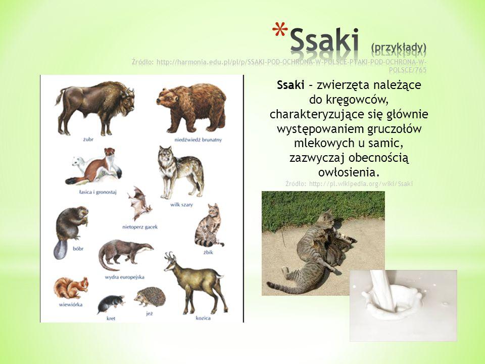 Ssaki – zwierzęta należące do kręgowców, charakteryzujące się głównie występowaniem gruczołów mlekowych u samic, zazwyczaj obecnością owłosienia. Źród