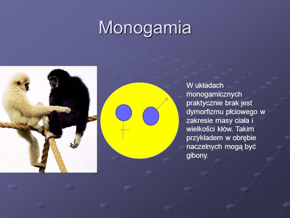Monogamia W układach monogamicznych praktycznie brak jest dymorfizmu płciowego w zakresie masy ciała i wielkości kłów. Takim przykładem w obrębie nacz