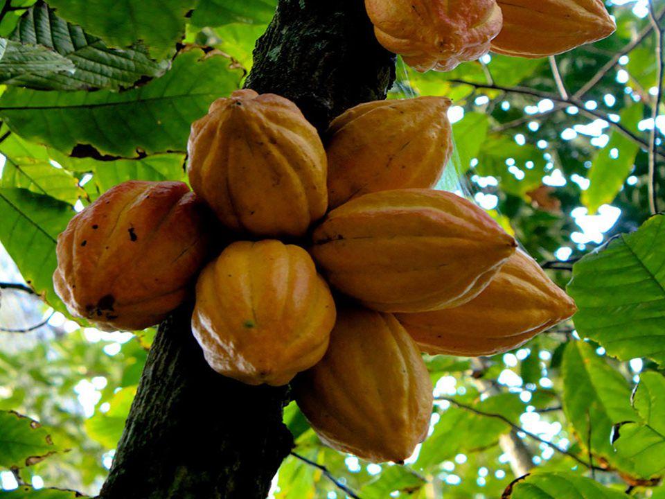 8. Almond (Migdały)