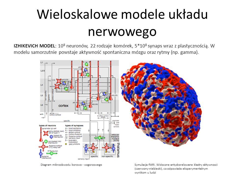 Wieloskalowe modele układu nerwowego Diagram mikroobwodu korowo - wzgorzowego Symulacja fMRI. Widoczne antyskorelowane klastry aktywnosci (czerwony-ni