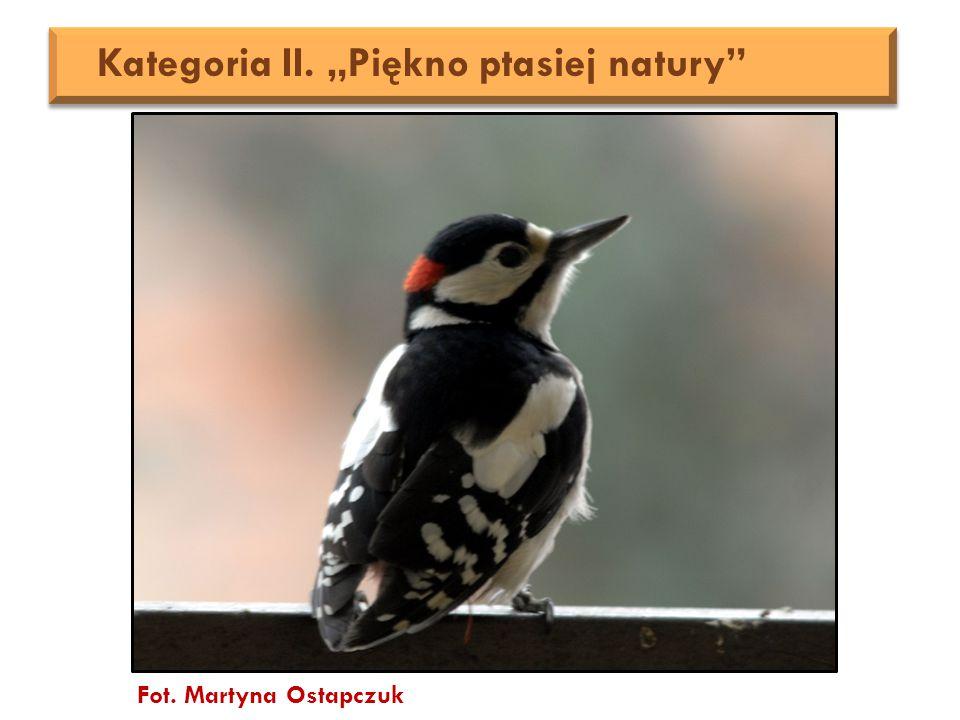 "Fot. Martyna Ostapczuk Kategoria II. ""Piękno ptasiej natury"