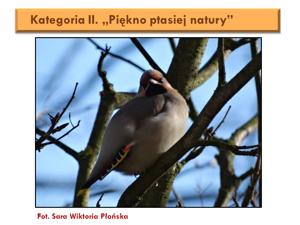 "Fot. Sara Wiktoria Płońska Kategoria II. ""Piękno ptasiej natury"