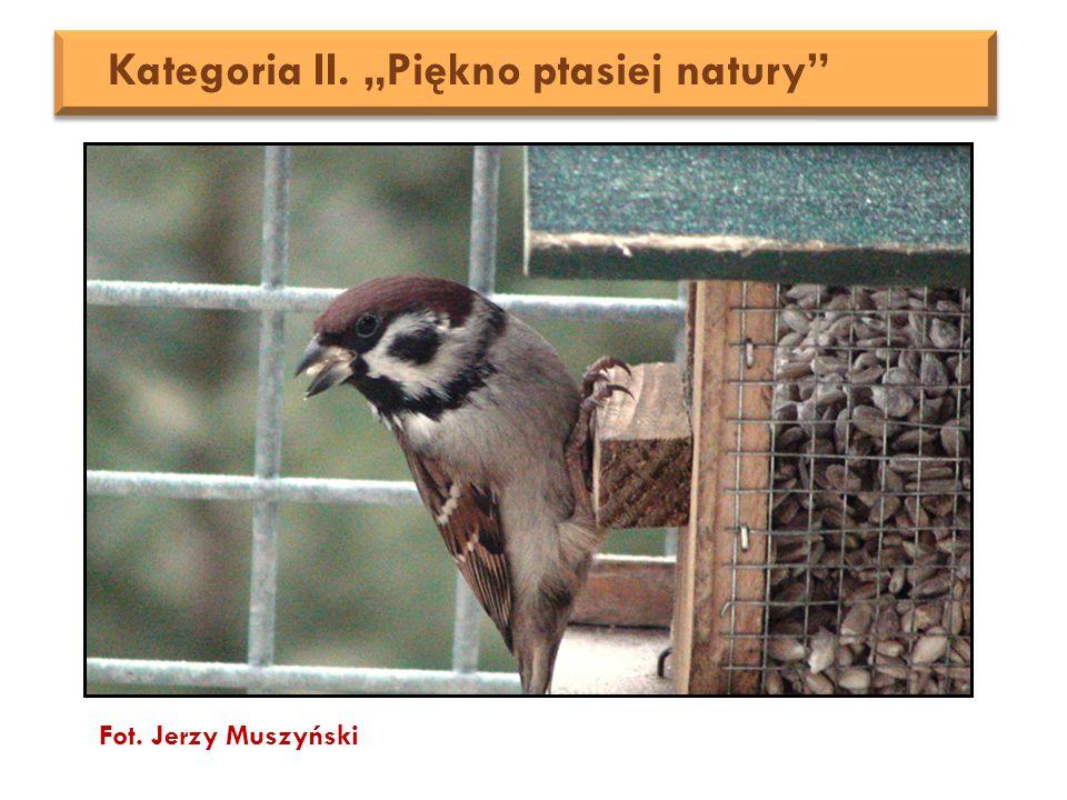 """Fot. Jerzy Muszyński Kategoria II. """"Piękno ptasiej natury"""