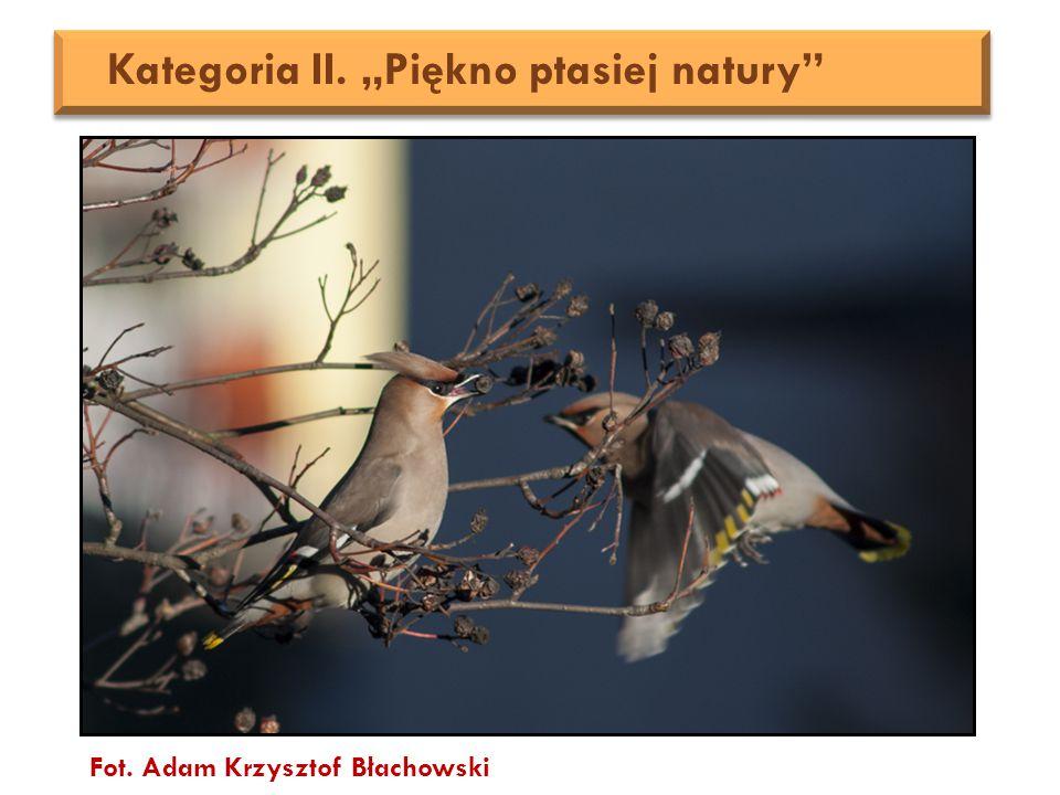 """Fot. Adam Krzysztof Błachowski Kategoria II. """"Piękno ptasiej natury"""