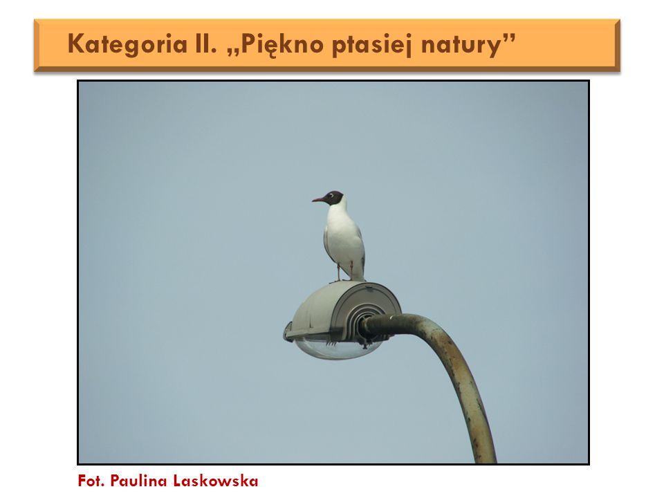 "Fot. Paulina Laskowska Kategoria II. ""Piękno ptasiej natury"