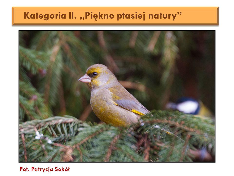 """Fot. Patrycja Sokół Kategoria II. """"Piękno ptasiej natury"""