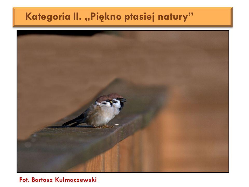 """Fot. Bartosz Kulmaczewski Kategoria II. """"Piękno ptasiej natury"""