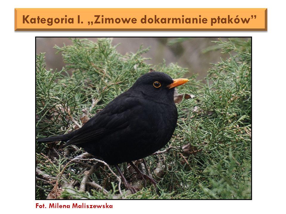 """Kategoria I. """"Zimowe dokarmianie ptaków Fot. Milena Maliszewska"""