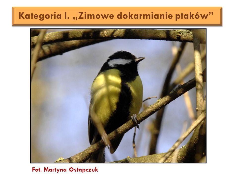 """Fot. Martyna Ostapczuk Kategoria I. """"Zimowe dokarmianie ptaków"""