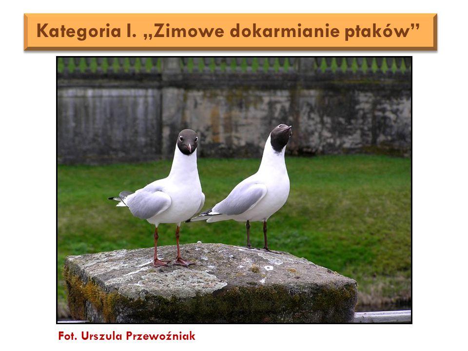 """Fot. Urszula Przewoźniak Kategoria I. """"Zimowe dokarmianie ptaków"""